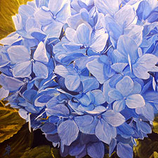 Blue Hydrangea painting by Sharon Bignell
