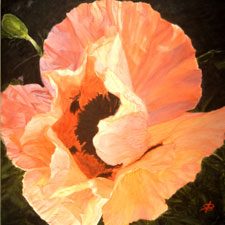 Painting of Peach Poppy by Sharon Bignell