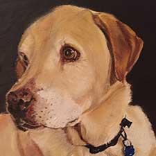 Yellow Lab Pet Portrait by Sharon Bignell