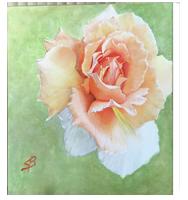 Newburyport Canvas prints by Sharon Bignell Fine Art